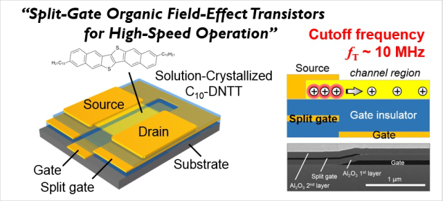 Split-Gate Organic Field-Effect Transistors for High-Speed Operation