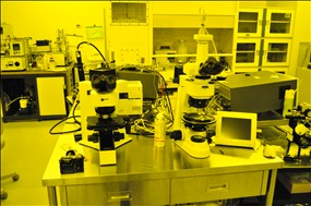 (左)光学顕微鏡 (右)偏光顕微鏡