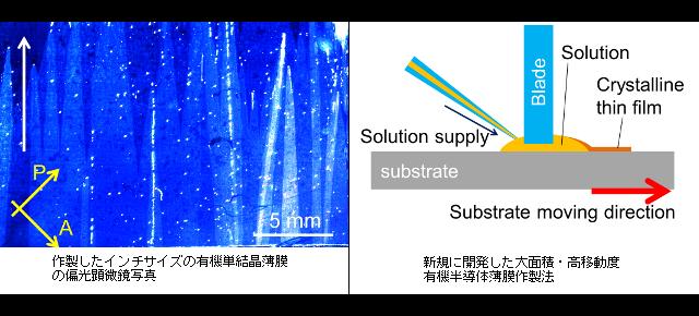 インチサイズの有機半導体単結晶薄膜